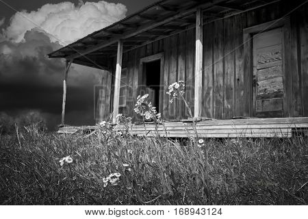 Old Shack with flowers before the storm
