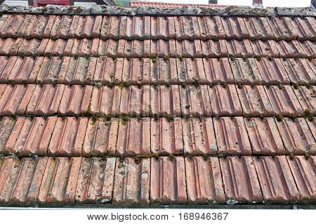 Old terracotta roof tiles with moss, close-up