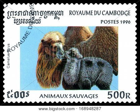 STAVROPOL RUSSIA - January 27 2017 : A Postage Stamp Printed in the Cambodia Shows Bactrian camel (Camelus ferus) circa 1996