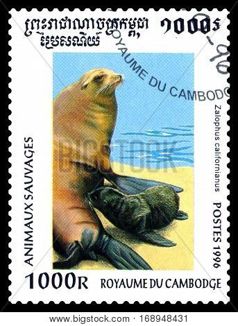 STAVROPOL RUSSIA - January 27 2017 : A Postage Stamp Printed in the Cambodia Shows California Sea Lion (Zalophus californianus) circa 1996
