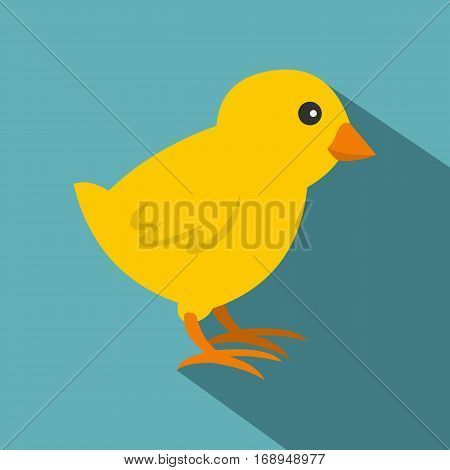 Chick icon. Flat illustration of chick vector icon for web