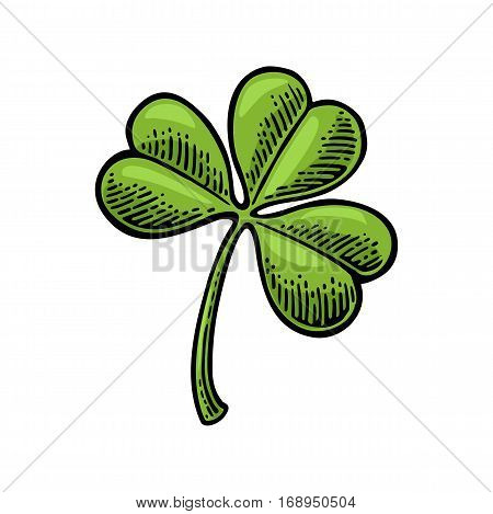 Clover. Vintage color vintage vector engraving illustration isolated on white background.