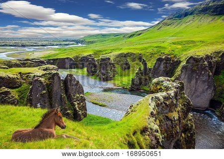 The striking canyon in Iceland. The Icelandic Tundra in July. Bizarre shape of cliffs surround the stream with glacial water. Thoroughbred horse rested on a cliff