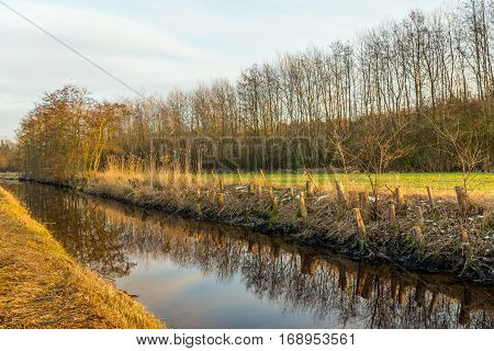 Narrow stream with a reflective mirror smooth water surface in a rural area. On the banks are sawn tree stumps as well as some remains of the snow. It is winter in the Netherlands.