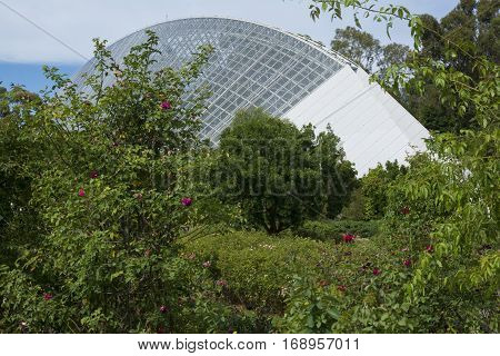 Adelaide South Australia Australia - January 8 2017: The rose garden at the Adelaide Botanic Garden with the Bicentennial Conservatory in the background.