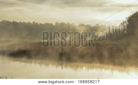 Mist rises from a marsh on an Ontario lake.   Contrail in pale summer sky.  Sunrise over narrow passage of a lake.   A row of swamped, dying spruce trees is enshrouded in fog.