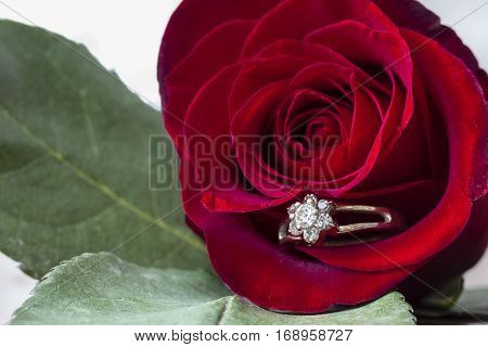 horizontal macro image of a deep red rose with green leaves and a ring inside the petal of the flower.