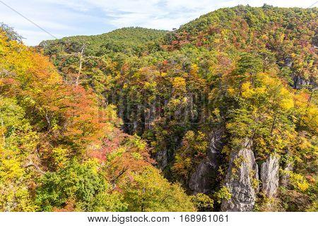 Autumn foliage on the cliff
