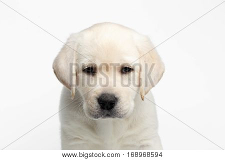 Close-up portrait of Unhappy Labrador puppy Looking down head on white background, front view