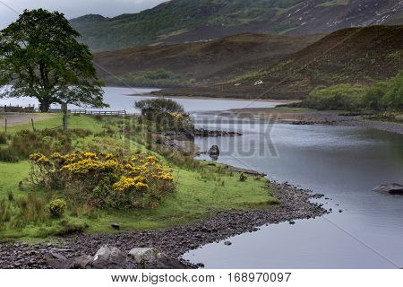 North Coast, Scotland - June 6, 2012: The shallow bluish gray Hope River meanders through a green landscape in front of tall mountains. Shades of green and yellow accents by broom flowers.