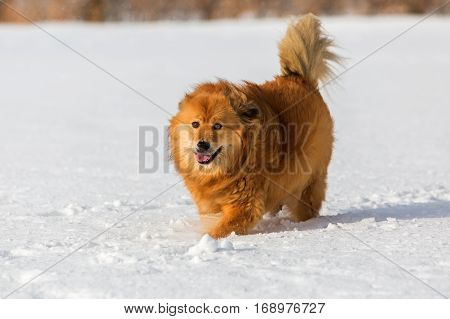 Elo Dog Walks In The Snow
