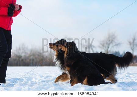 Woman With Two Dogs In The Snow