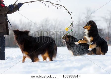 Man Plays With Dogs In The Snow