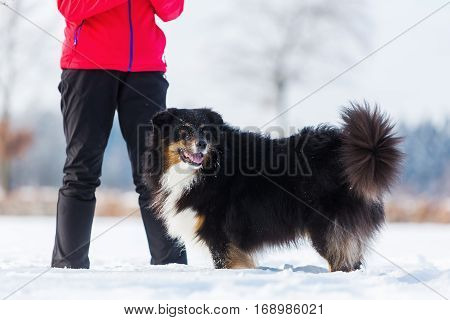 Woman Plays With A Dog In The Snow
