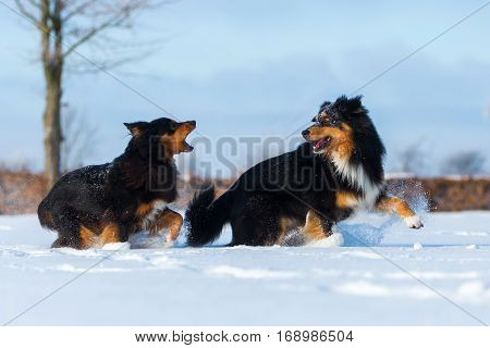 Two Dogs In The Snow