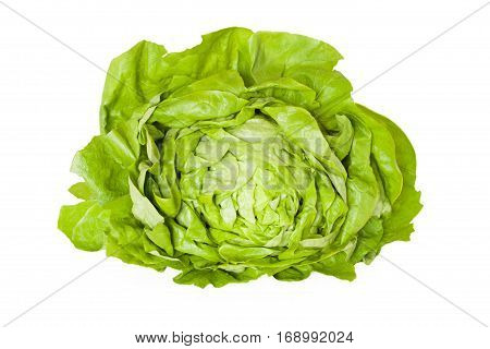 Butterhead Lettuce Isolated