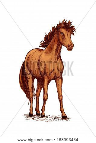 Horse foal or young mare vector sketch. Brown wild or farm stallion symbol for equestrian racing sport, horse riding races club, equine exhibition. Arabian brown mustang standing on ground and stomping or stamping with hoof