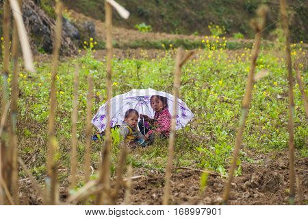 Ha Giang, Vietnam - Feb 18, 2013: Two Hmong children with umbrella sit at cultivated land waiting for their parents finish working at nearby