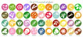 Big icon set of 44 popular essential oil labels. white silhouettes. Ylang-ylang, eucalyptus, jasmine, rose, sandalwood, patchouli etc. For cosmetics, spa, health care, aromatherapy homeopathy Ayurveda poster