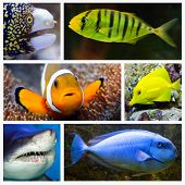 Marine life collage composed of pictures with underwater theme. poster
