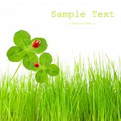 Clover quarterfoils with ladybugs over a fresh spring gras and easy removable text. poster