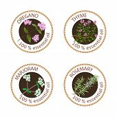 Set of 100 essential oils labels. Oregano, Thyme, marjoram, rosemary symbols. Logo collection. Vector illustration. Brown stamps, realistic. For cosmetics spa health care aromatherapy cosmetics poster