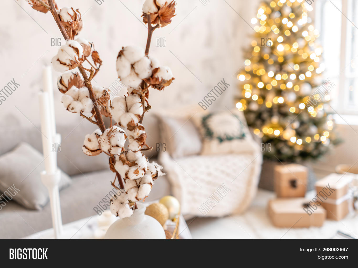 Vase Cotton Branches Image Photo Free Trial Bigstock