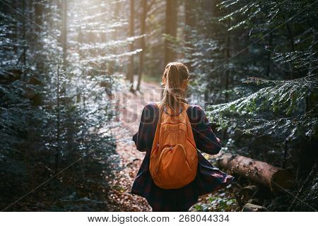 Woman Hiker Walking On The Trail In Pine Woods