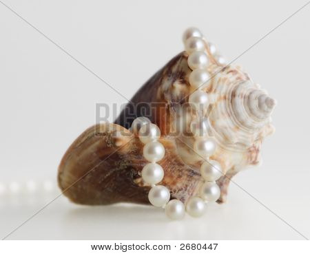 Beautiful Pearl Necklace And Shell