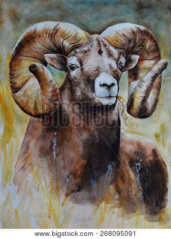 A Brown Large Male Ram With Steep Large Horns Looks Straight Ahead. Realistic Watercolor Painting. B