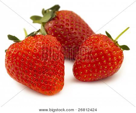 tree isolated strawberries