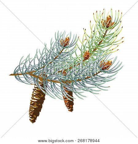 Pine Cone With Branch, Spruce Branch With A Cone 10eps