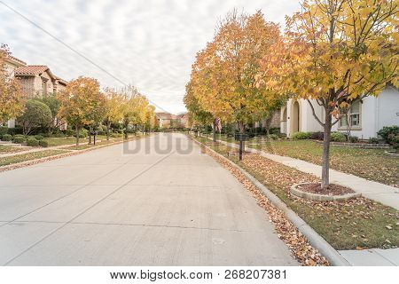 Stunning Yellow Fall Foliage Color At New Residential Neighborhood In Suburban Dallas, Texas