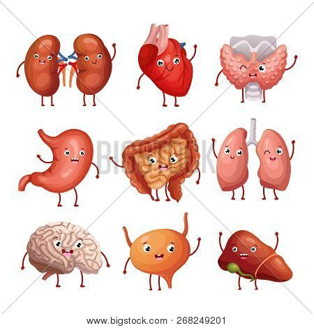 Cute Cartoon Human Organs. Stomach, Lungs And Kidneys, Brain And Heart, Liver. Funny Inner Organs Ve