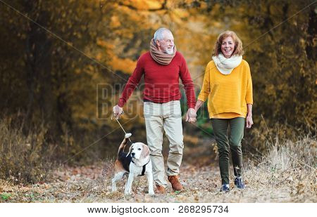 A Senior Couple With A Dog On A Walk In An Autumn Nature.