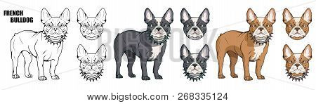 French Bulldog, Pet Logo, Dog French Bulldog, Colored Pets For Design, French Bulldog Puppy, Colour