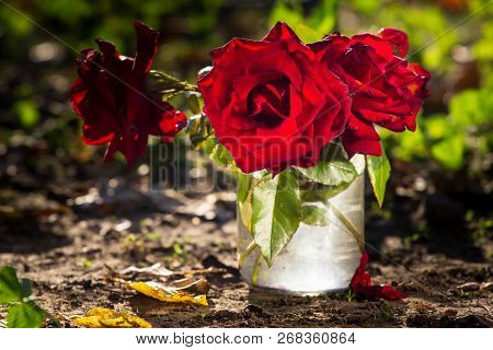 A Bouquet Of Garden Roses In A Glass Jar On The Garden