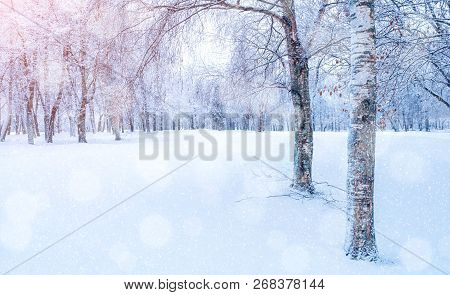 Winter landscape - frosty trees in winter forest in the sunny morning. Winter landscape with snowy winter trees. Tranquil winter forest nature in soft morning sunlight