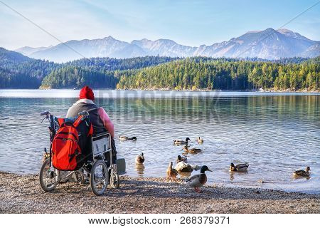 Disabled Handicapped Woman Sitting On Wheelchair And Feeding Bread For Mallard Duck On Beautiful Sce