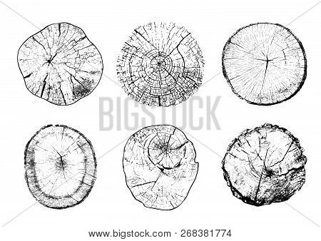 Set Of Cut Tree Trunks With Circular Rings Isolated On White Background. Textures Of Wood Logs. Blac