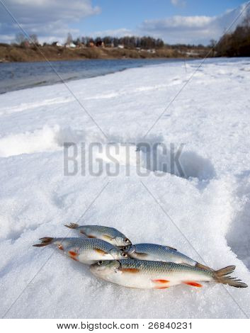 Sunny weather, deep snow on river bank and small catch