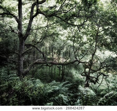 dense dark green shadowy forest with ferns covering the ground and old twisted trees with light shining though the woodland canopy poster