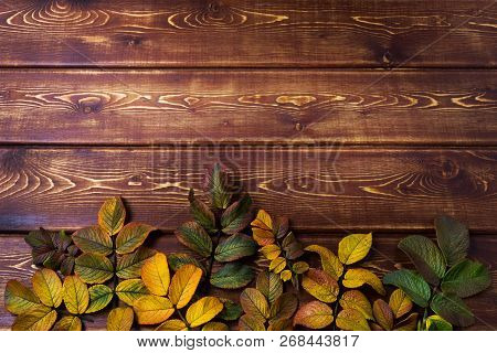Thanksgiving Background With Rosehip Leaves, Copy Space