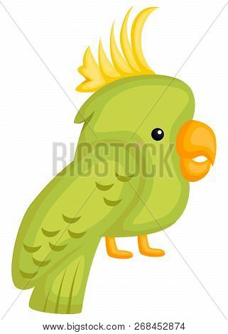A Vector Of A Cute And Adorable Cockatiel