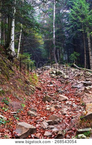 Stone Road In The Mountains Between Beautiful Conifers. Mountain Landscape. Natural Background.
