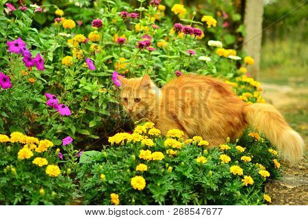 Red Cat Among The Flowers On Bright Flowerbed.