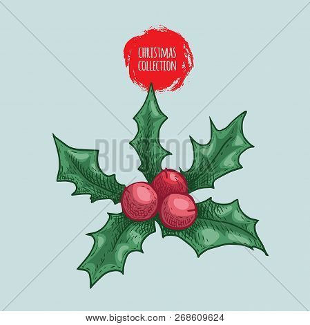 Christmas Plant Holly Berry. Sketch Style Hand Drawn Drawing. Colorful Vector Illustration. Winter H