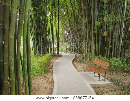 Landscapes Of Chinese Bamboo Park. Chengdu City. China.