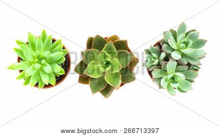 Top View Green Succulent Cactus In Pot Isolate On White Background, Decoration Concept