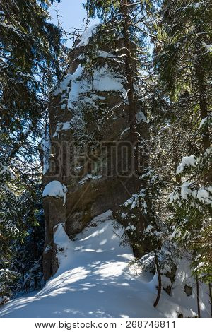Sunny Winter Day Snow Covered Stony Boulder Rock View In Wild Fir Forest.  Picturesque Hungarian Sto